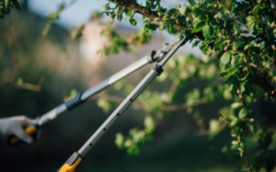 3 Tips for Tree Pruning Like a Professional