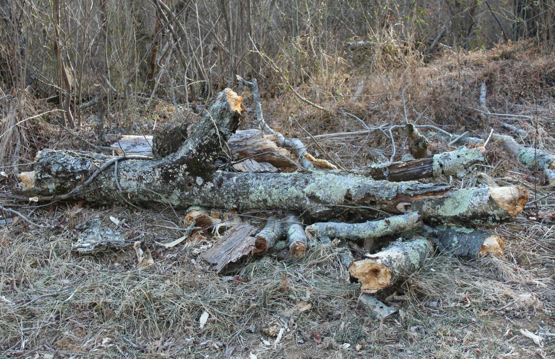Fuquay-Varina Tree Health
