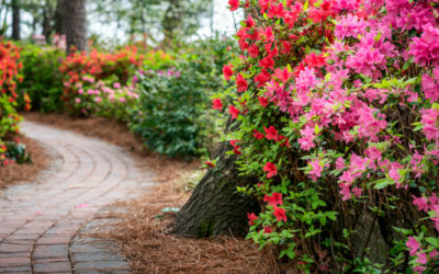 Top 10 Parks in the Triangle: The Best Public Parks in Raleigh, Cary, & Apex