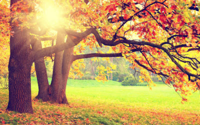 Fall Maintenance Tips For Your Trees In Raleigh, NC