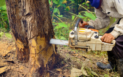 The Blackhawk Tree Removal Process