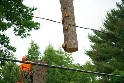 Fuquay-Varina Tree Removal
