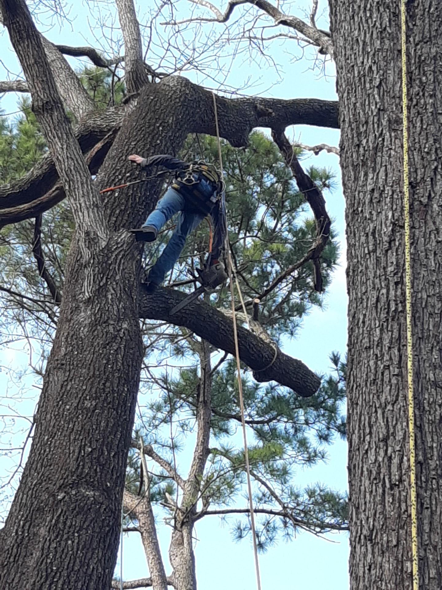 Fuquay-Varina Commercial Tree Services